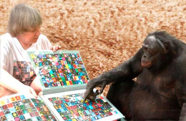 Бонобо Канзи