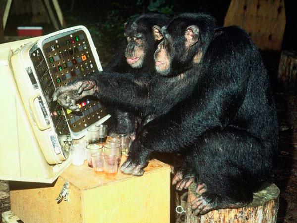 Шимпанзе Шерман и Остин