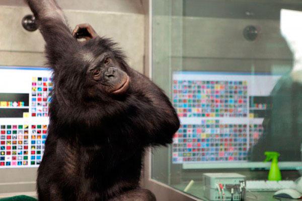 Бонобо Панбэниша