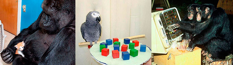 Животные, научившиеся использовать и понимать речь человека