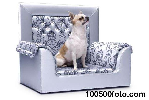 Трон для собак Сваровски