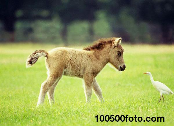 Симпатичная миниатюрная лошадка