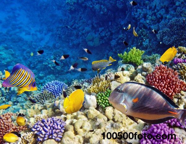 Коралловые рифы Красного моря 1