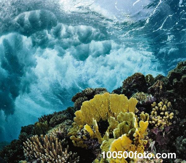 Коралловые рифы Красного моря 2