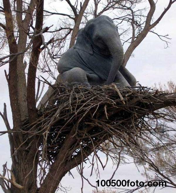 Слон на дереве