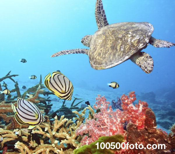 Коралловые рифы Флорида-Кис 1