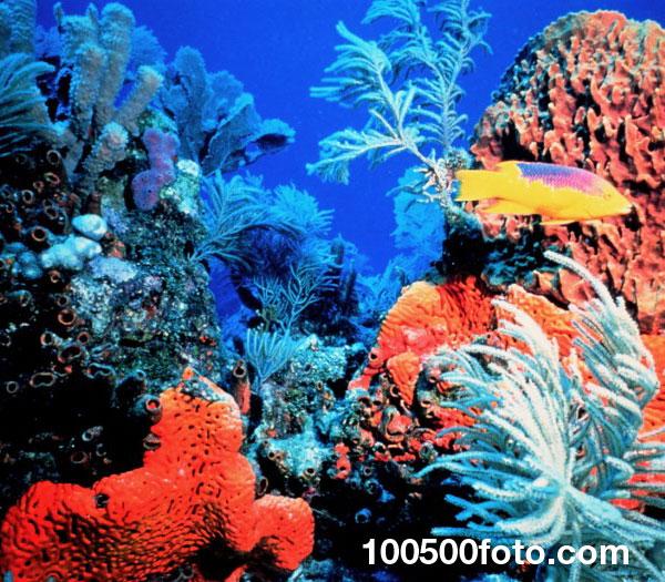 Коралловые рифы Флорида-Кис 2