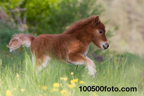 Мини-лошадка Мими