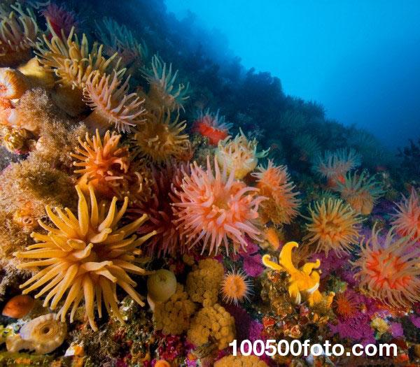 Мезоамериканский Барьерный риф 1