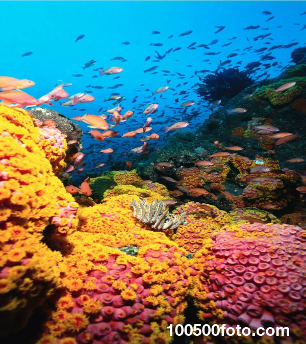 Барьерный риф Андрос