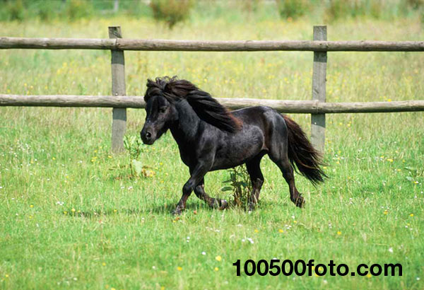 Маленькая лошадь