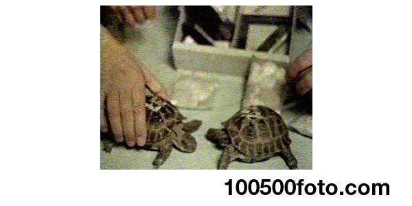 Черепахи-астронавты