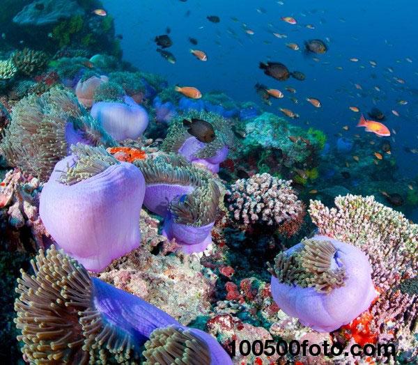 Мальдивские атоллы Чагос-Лакшадвил  1