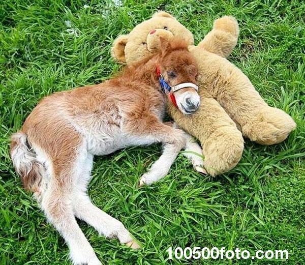 Маленькая лошадка с мишкой Тедди