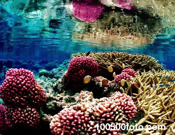 Барьерный риф Новой Каледонии 1