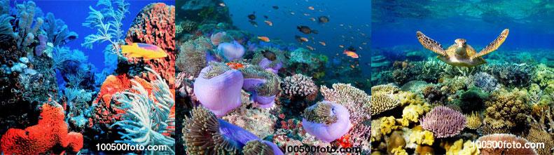 Самые великолепные коралловые рифы в мире