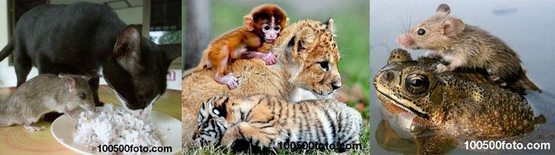 Животные, у которых возникла необычная дружба