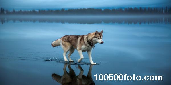 Одинокий волк (Россия)