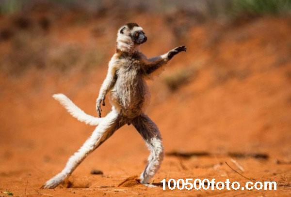 Потанцуй со мной (Мадагаскар)