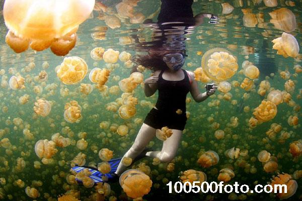 Среди желтых медуз (Палау)