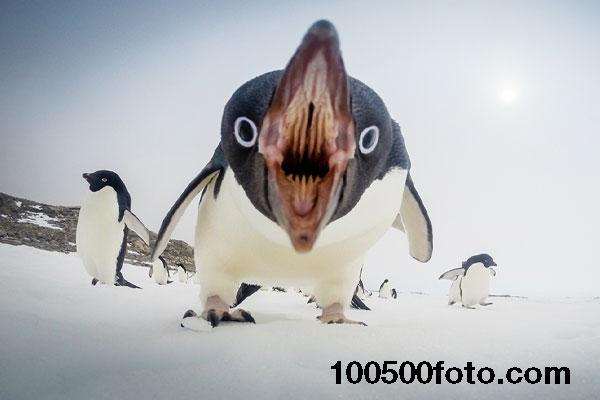 Принесли обед (Антарктика)