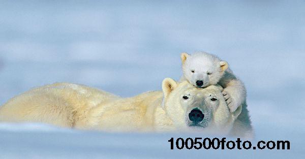 Арктическая любовь
