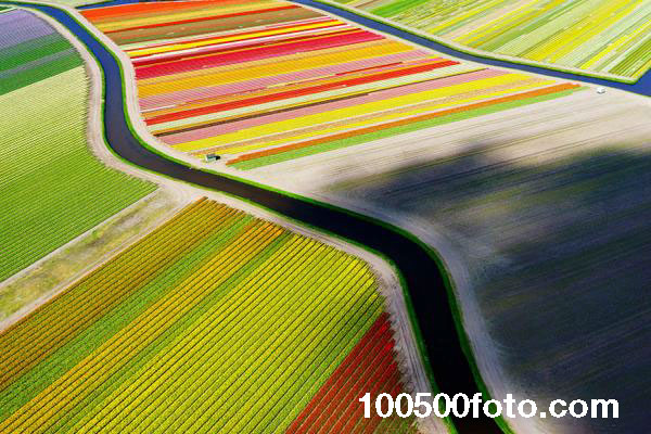 Цветочные моря (Голландия)