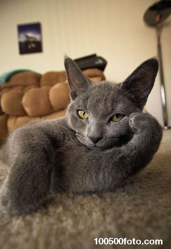 Кот принял позу забастовки в процессе ожидания хозяина
