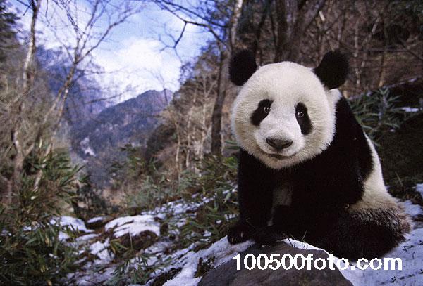 Всем привет! (Китай)