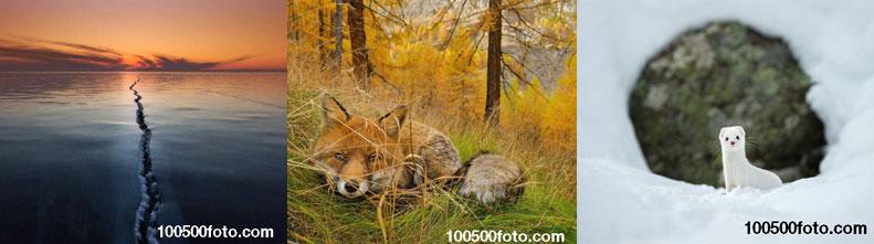 Лучшие фотоснимки National Geographic 2015