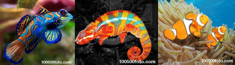 Самые красочные и яркие животные в мире