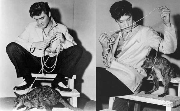 Элвис Пресли с кенгуру