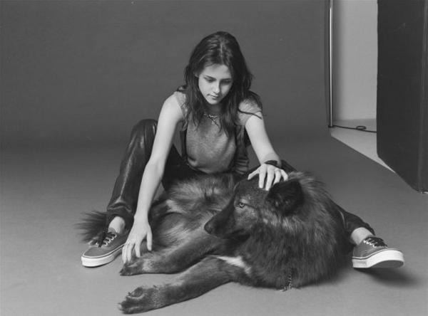 Актриса Кристен Стюарт с гибридом собаки и волка