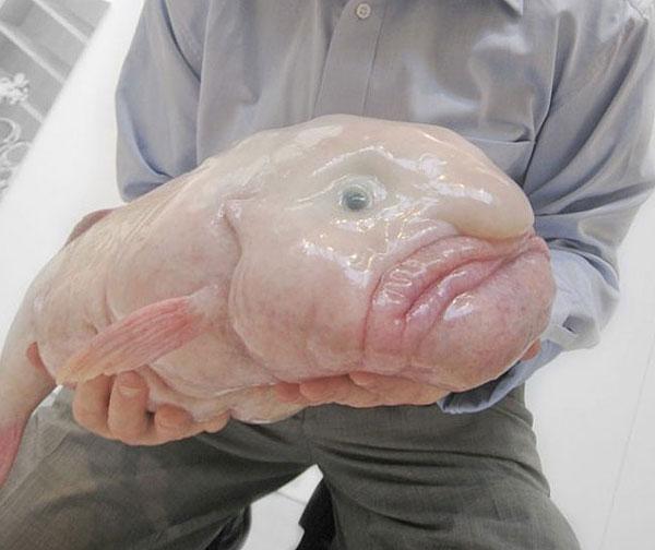 Рыба-капля 2