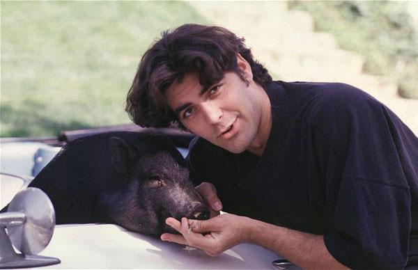 Джордж Клуни со своим Максом