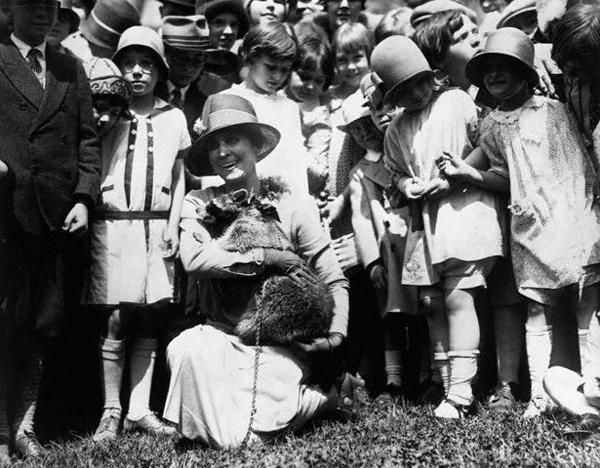Первая леди Грей Кулидж с енотом Ребеккой