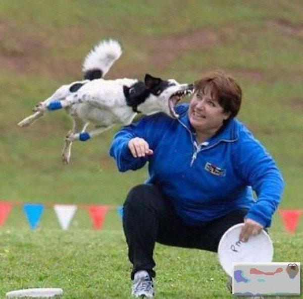 Тренировать собак бывает опасно, особенно для ушей