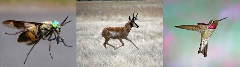 Самые быстрые в мире животные