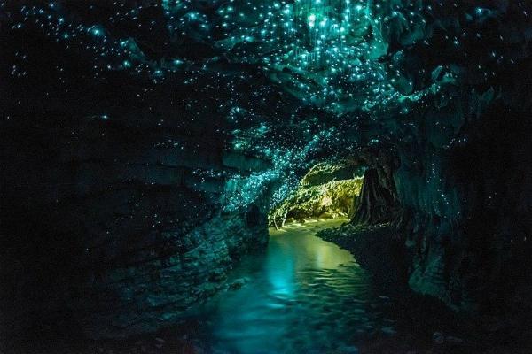 Пещера светлячков (Новая Зеландия) Магические мерцающие звездочки – это всего лишь грибные комары. Их личинки создают липки нити, свисающие со стен и потолка, и подсвечивают их, чтобы привлечь мелких насекомых себе на обед, а также голодных на всякие чудеса туристов.