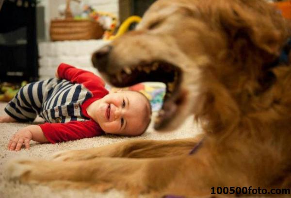 Спорное фото: Собака – друг человека?