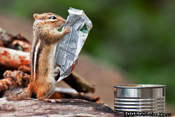 Фото дня: Что там сегодня пишут в прессе?