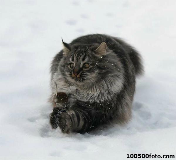 Классическое фото: кошки-мышки