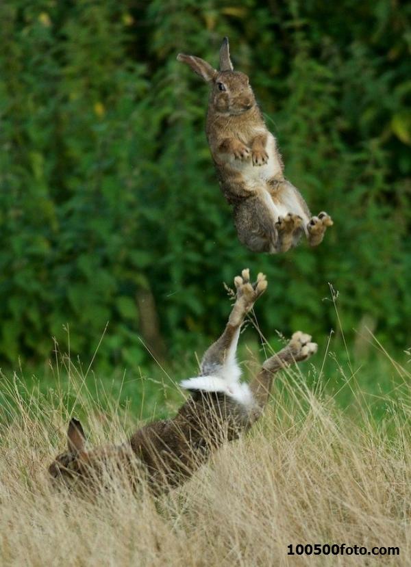 Фото про то, что зайцы умеют прыгать