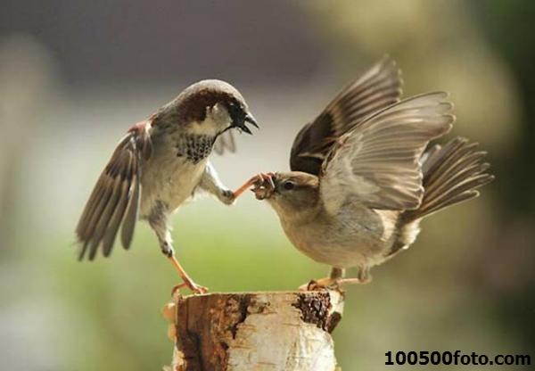 Эти смешные животные: Закрой клюв, я сказал!