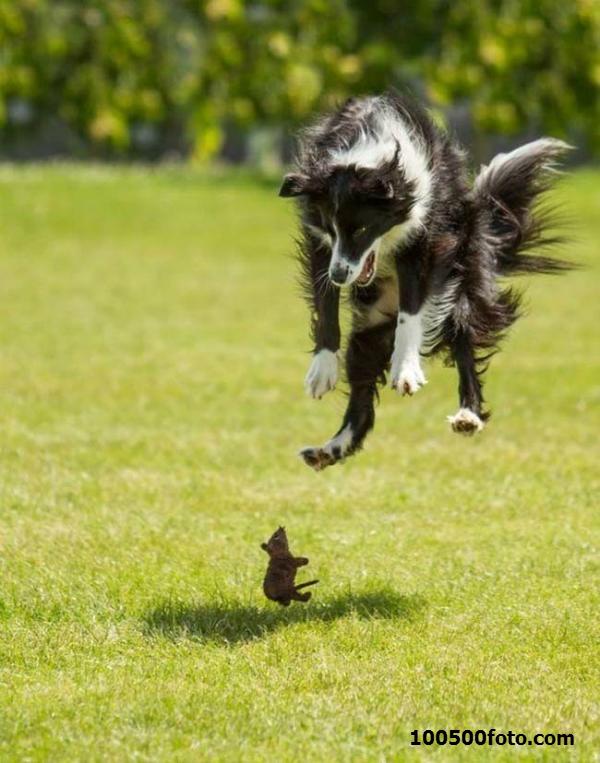 Фотография игры собачки-мышки