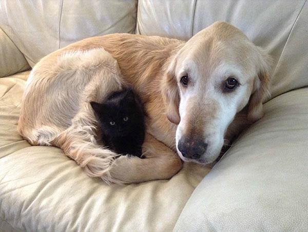 Форсбергу было очень скучно без кошки. Но, как видите, уже проблема решена.