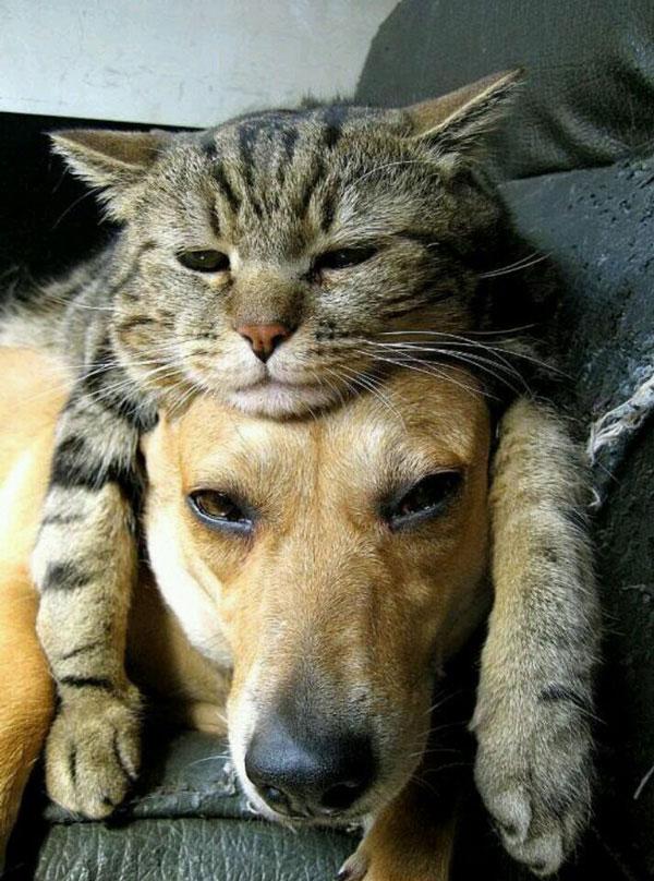 Кот-головной убор