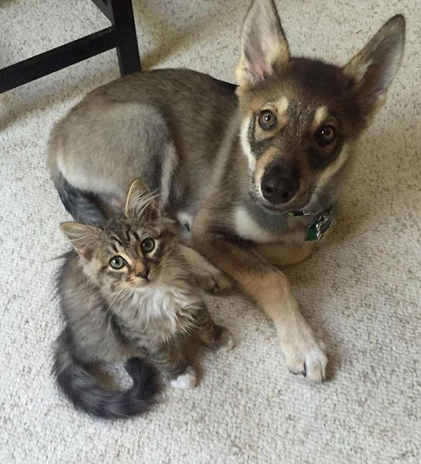 Если вы попросите своего щенка выбрать себе приятеля, как вы думаете, кто им станет?