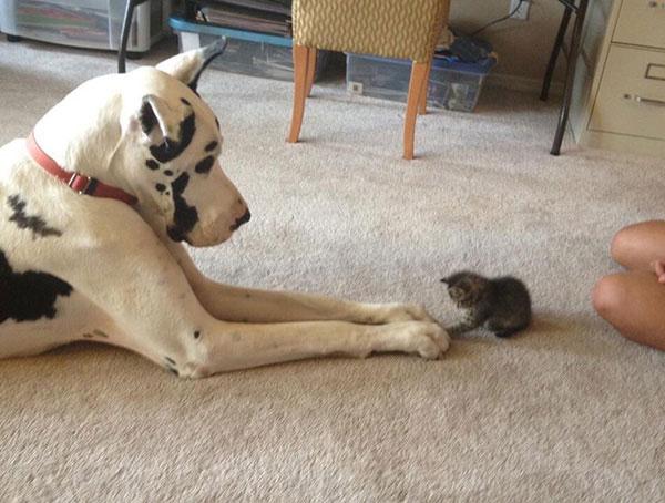 У Льюиса появился новый друг
