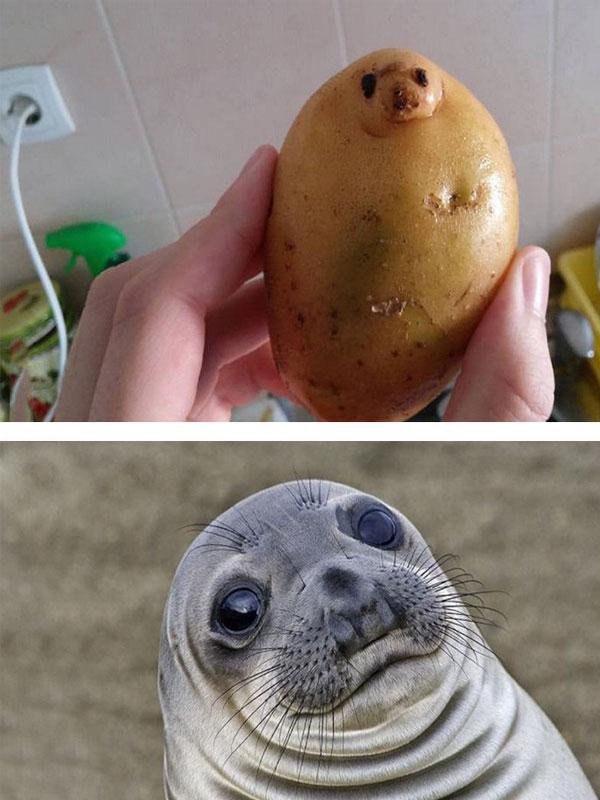 Картофельные глазки